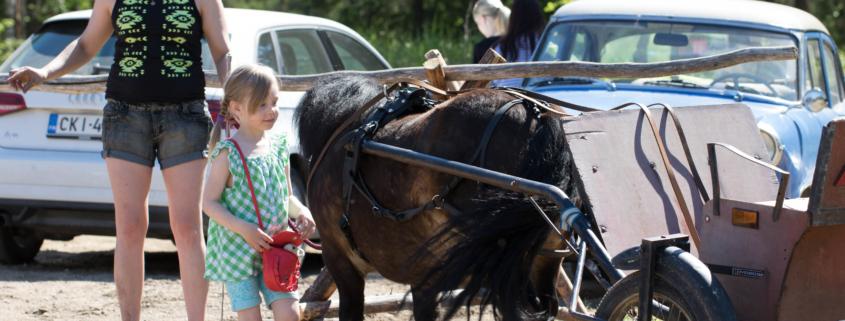 Hevos- ja poniajelutusta